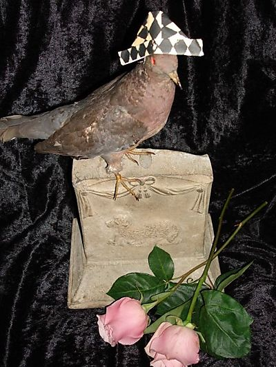 Pigeon hat 2