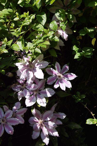 Garden 20112