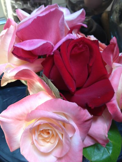 Roses 2012 16
