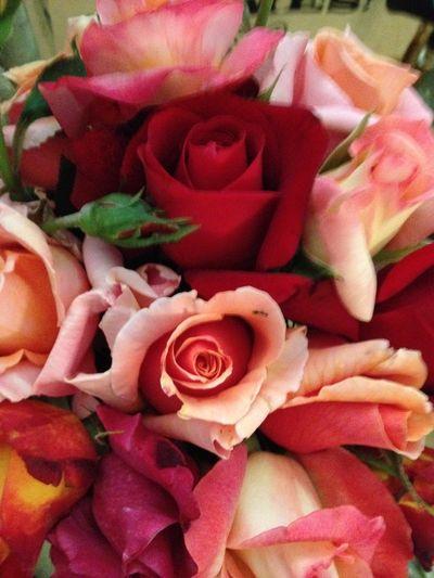 Roses 2012 13