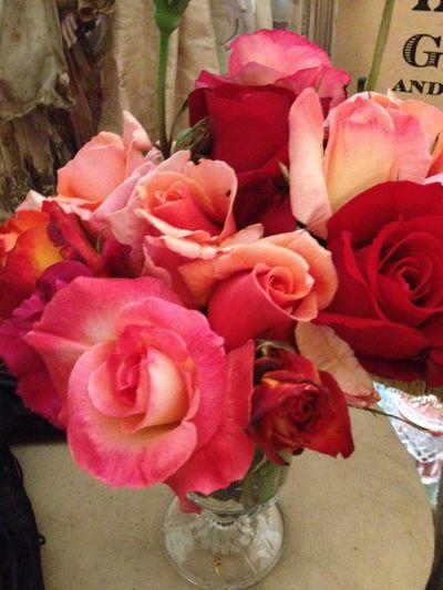 Roses 2012 11