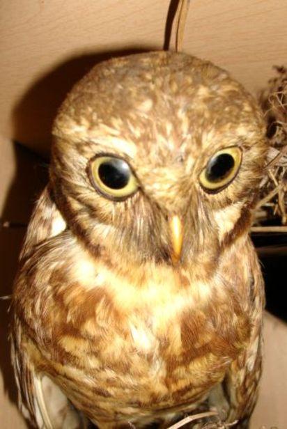 Blog_owl_3