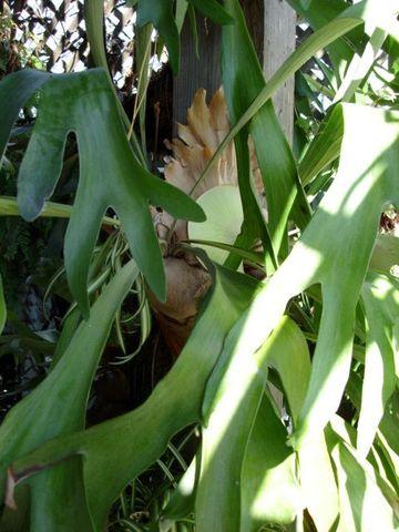 Yard_20084